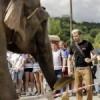 Для уборки Гребного канала пригласили… слона